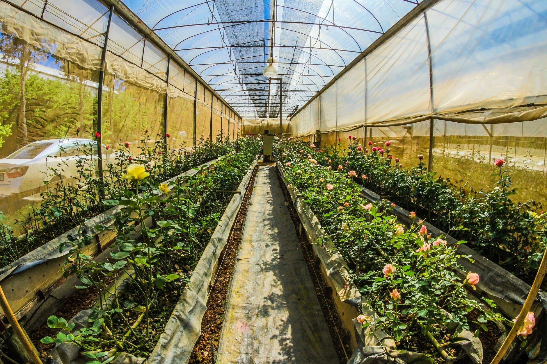 Dyrk planter i dine egne drivhuse
