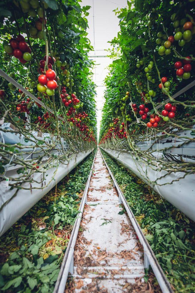 Altid friske planter i drivhuse