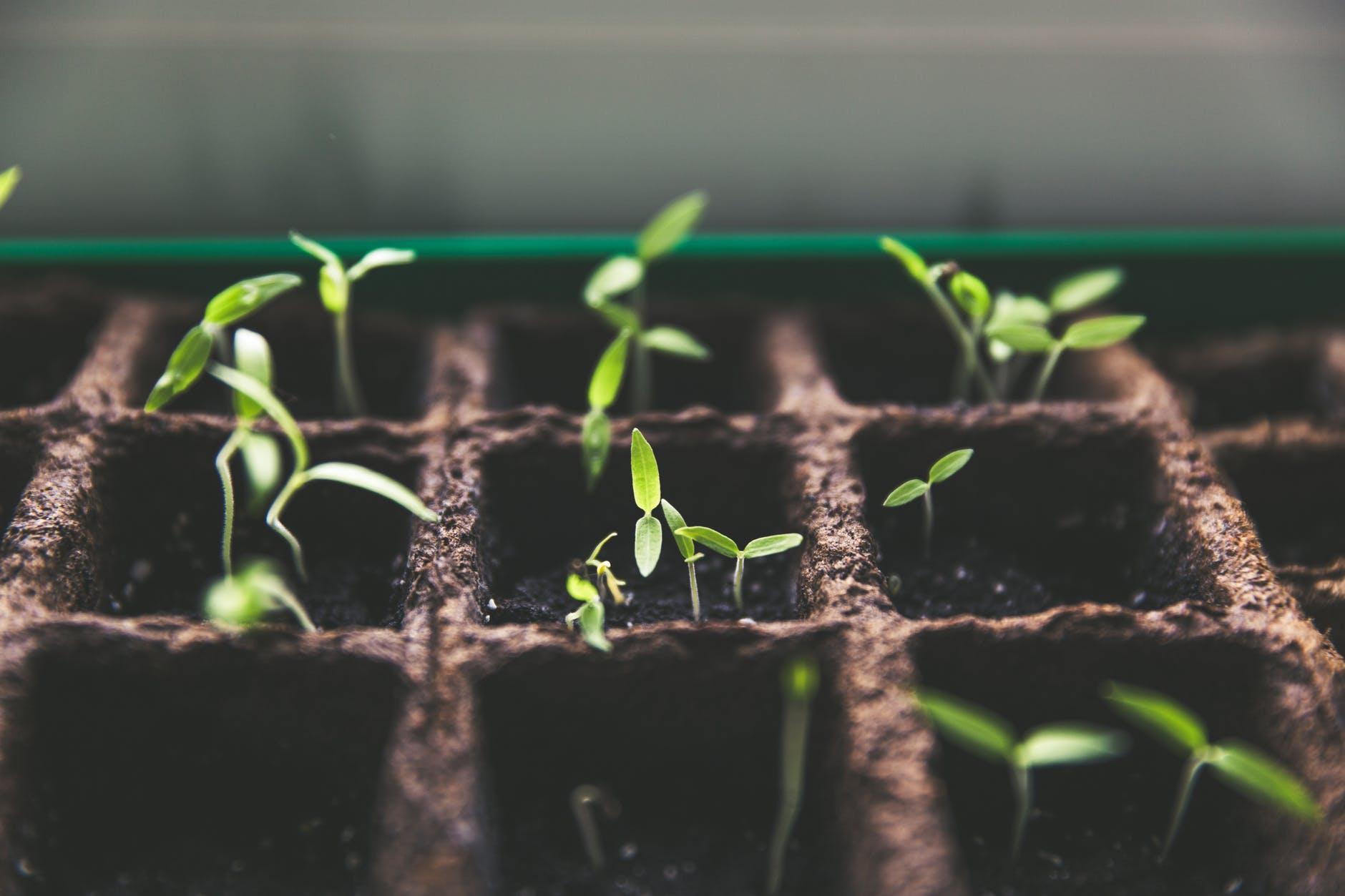 Vækstlys forbedrer planternes vækst