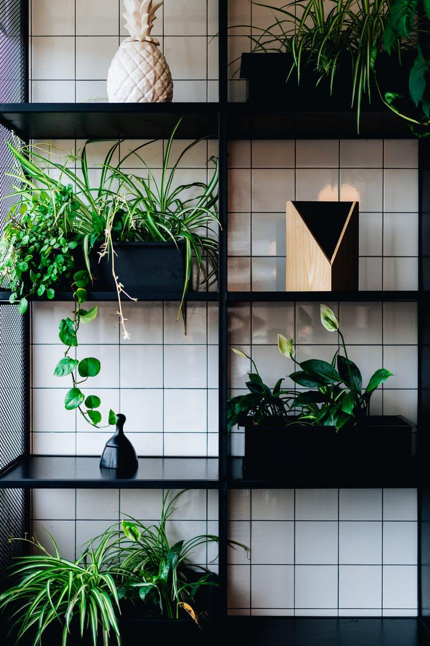 Giv planterne i hjemmet lys med vækstlys